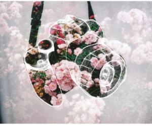 camera, flowers, and cute image
