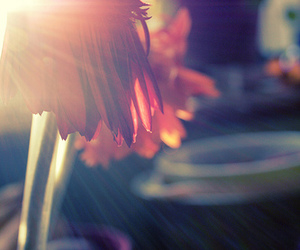 flare, flower, and light image