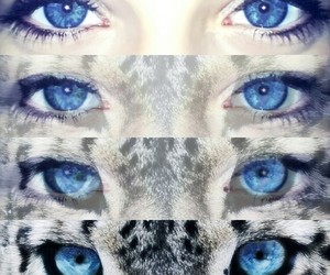 blue eyes, eyes, and leopard image
