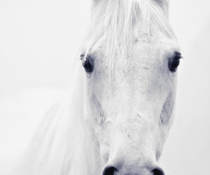 wild horse image