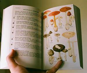 book, mushroom, and vintage image