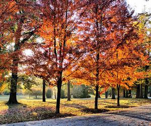 trees, autumn, and orange image