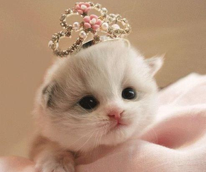 cat, cute, and princess image