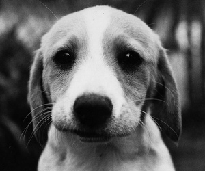 dog, cute, and black and white image