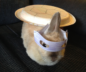 bunny, bunny costume, and Halloween image