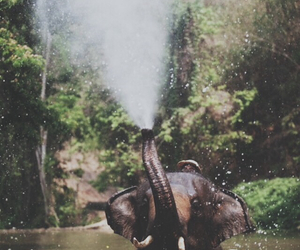 elefant, nature, and water image