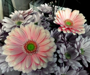 flowers, mothers day, and pink image