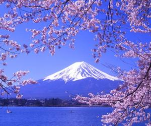 japan, mountains, and flowers image