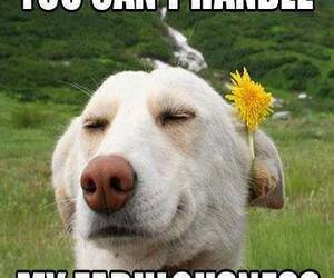 dogs, flowers, and funny image