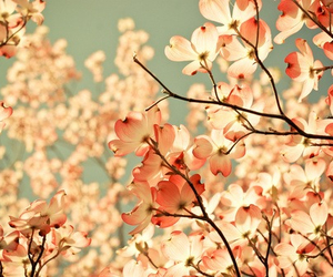 flower, flowers, and pink• cute• image