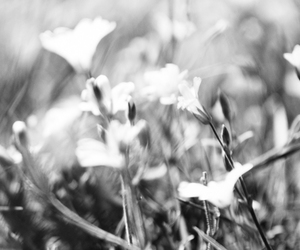 black and white, flower, and nature image