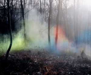 forest, smoke, and trees image