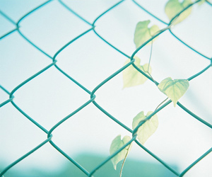 aesthetic, fence, and leaves image