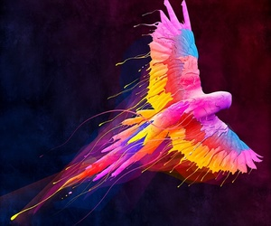 bird and colorful image