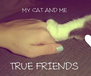 beautiful, cat, and me image