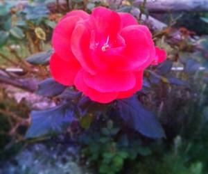 autumn, garden, and romantic image
