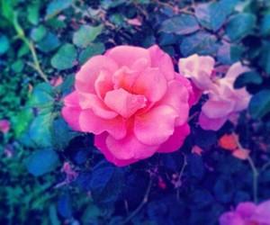 autumn, garden, and enchanted image