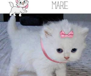 gat, gato, and marie image