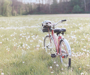bike, nature, and flowers image