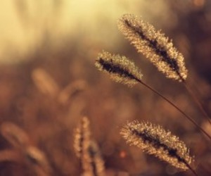 fall, wheat, and photography image