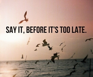 quote, say, and bird image