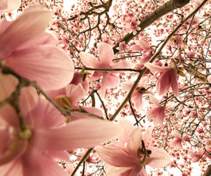 flower, pink flowers, and cute image
