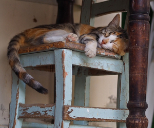 cat, animal, and chair image