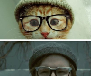 cat, patrick stump, and fall out boy image