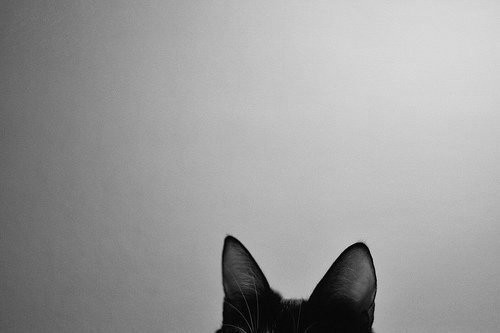 d043d61f6af5bb pinterest photography - Google Search on We Heart It