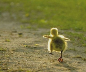 daytime, duck, and cute image