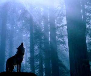 cool, Howl, and wolf image