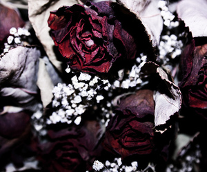 flowers, roses, and photography image