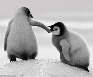 baby and penguins image