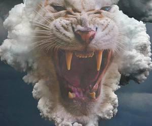 tiger and smoke image
