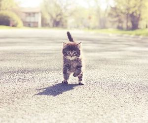 cat, pequeno, and cute image