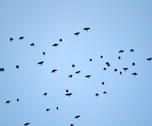 birds, stockholm, and sky image