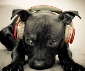 animal, dog, and music image