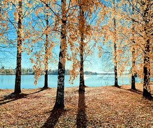 photography, beautiful, and tree image