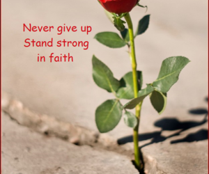 faith, flower, and give up image