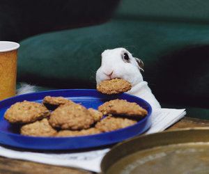 bunny, rabbit, and cookie image