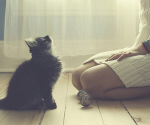 cat, girl, and cute image