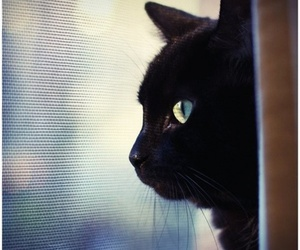 black, cat, and photography image