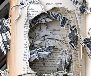 book, art, and insect image