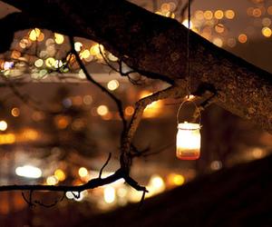 light, autumn, and tree image