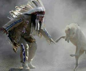 wolf and dance image