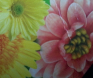 and, yellow, and flower image