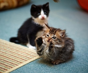 cat, adorable, and kitty image