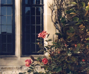 roses and window image