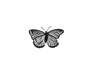 butterfly, cute, and black and white image