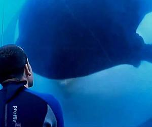 a kiss, from a beauty, and whale! <3 image